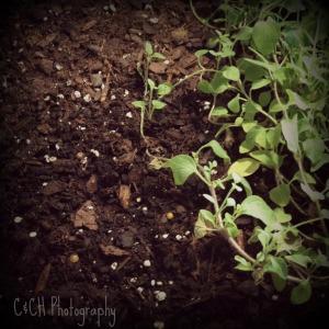 July 21 dirt