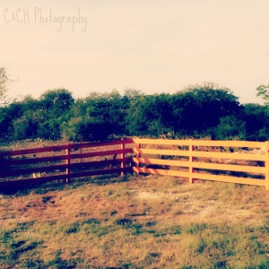 July 25 - fence