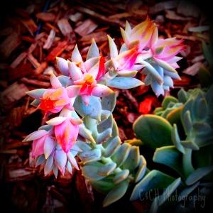 July1-flower